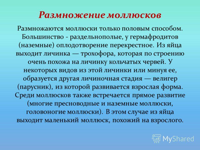 Размножение моллюсков Размножаются моллюски только половым способом. Большинство - раздельнополые, у гермафродитов (наземные) оплодотворение перекрестное. Из яйца выходит личинка трохофора, которая по строению очень похожа на личинку кольчатых червей