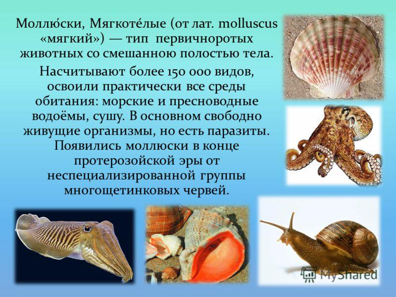 Моллю́ски, Мягкоте́лые (от лат. molluscus «мягкий») тип первичноротых животных со смешанною полостью тела. Насчитывают более 150 000 видов, освоили практически все среды обитания: морские и пресноводные водоёмы, сушу. В основном свободно живущие орга