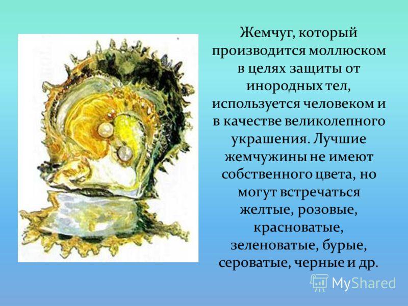 Жемчуг, который производится моллюском в целях защиты от инородных тел, используется человеком и в качестве великолепного украшения. Лучшие жемчужины не имеют собственного цвета, но могут встречаться желтые, розовые, красноватые, зеленоватые, бурые,