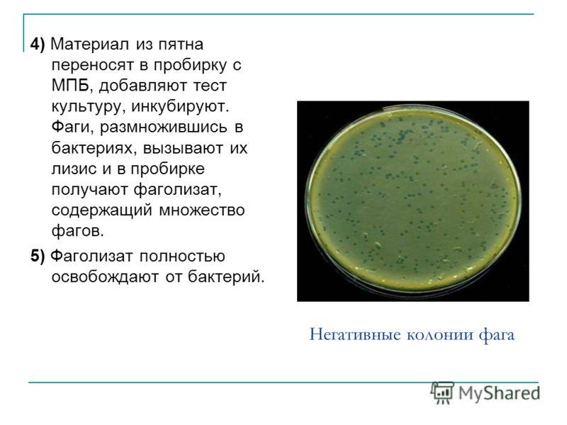 Негативные колонии фага 4) Материал из пятна переносят в пробирку с МПБ, добавляют тест культуру, инкубируют. Фаги, размножившись в бактериях, вызывают их лизис и в пробирке получают фаголизат, содержащий множество фагов. 5) Фаголизат полностью освоб