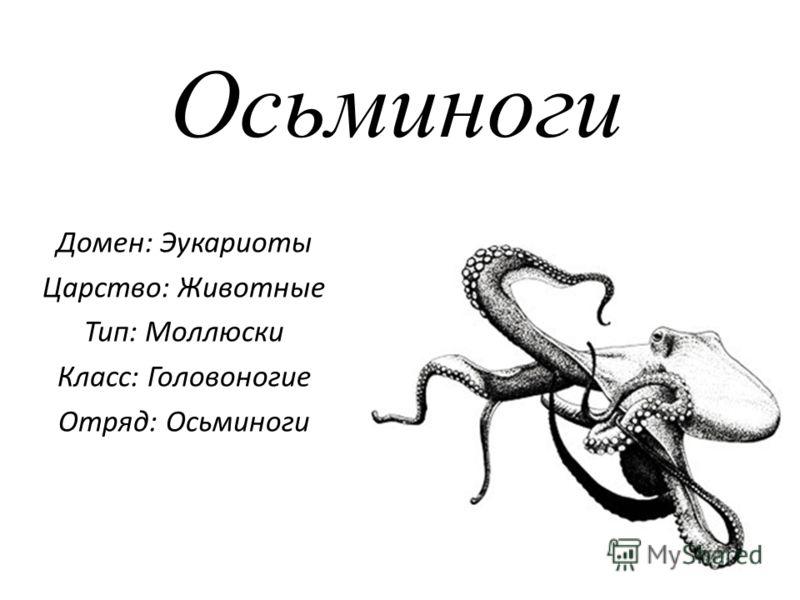 Осьминоги Домен: Эукариоты Царство: Животные Тип: Моллюски Класс: Головоногие Отряд: Осьминоги