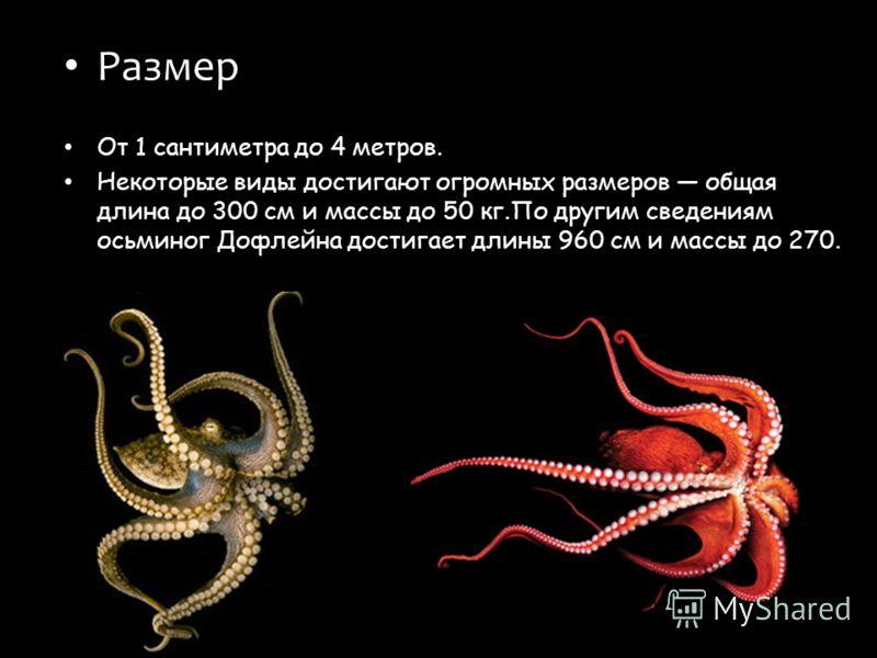 Размер От 1 сантиметра до 4 метров. Некоторые виды достигают огромных размеров общая длина до 300 см и массы до 50 кг.По другим сведениям осьминог Дофлейна достигает длины 960 см и массы до 270.