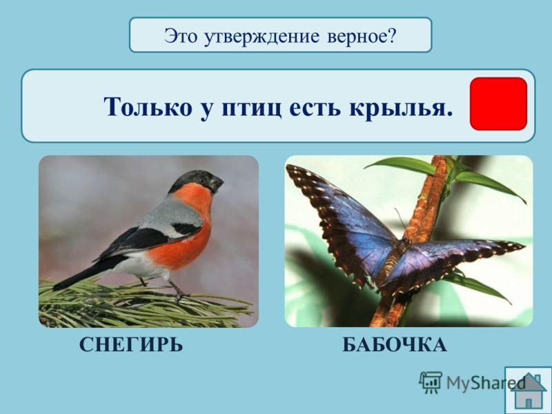 Только у птиц есть хвост. ГЛУХАРЬОКУНЬ Это утверждение верное?