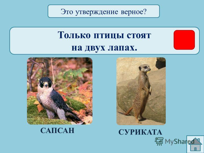 Только у птиц яркая окраска. СВИРИСТЕЛЬЖИРАФ Это утверждение верное?