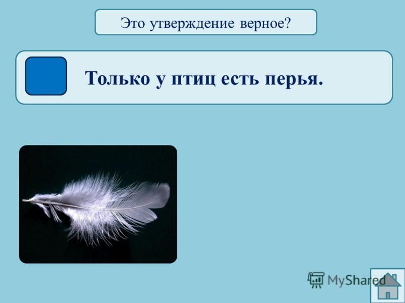 Только птицы стоят на двух лапах. САПСАН СУРИКАТА Это утверждение верное?