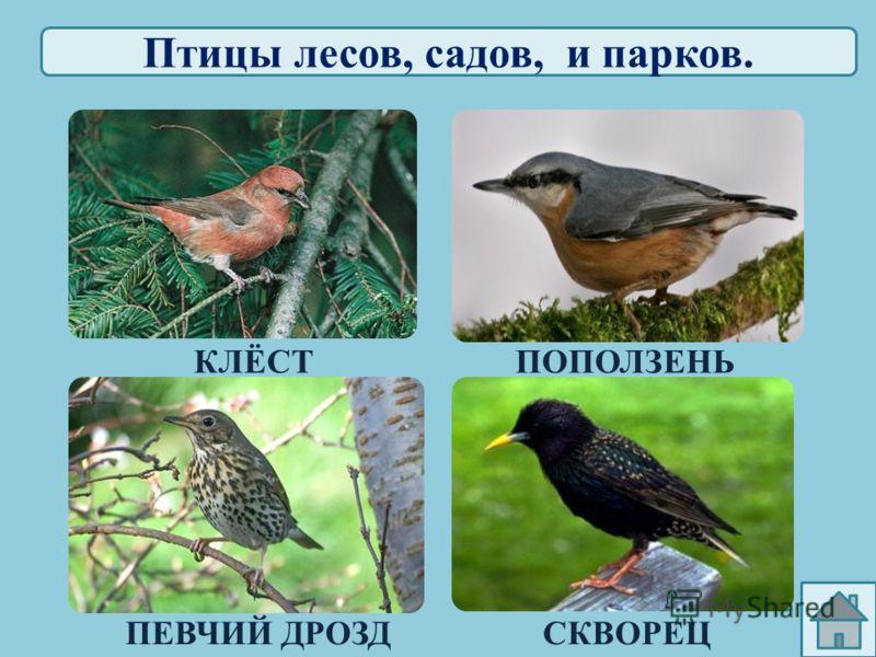 У воды и на воде. КРЯКВА ЛЕБЕДЬ-ШИПУН БЕЛЫЙ АИСТ ЗИМОРОДОК http://vision.rambler.ru/users/zoometod/1/3 /