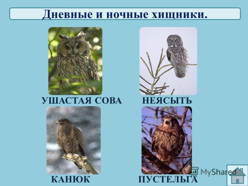 Птицы лесов, садов, и парков. КЛЁСТПОПОЛЗЕНЬ ПЕВЧИЙ ДРОЗДСКВОРЕЦ