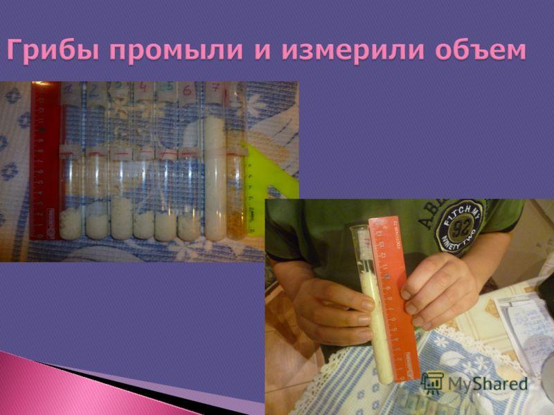 Грибы промыли и измерили объем