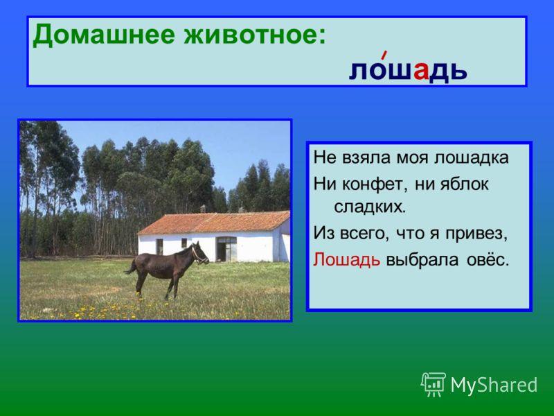 Домашнее животное: лошадь Не взяла моя лошадка Ни конфет, ни яблок сладких. Из всего, что я привез, Лошадь выбрала овёс.
