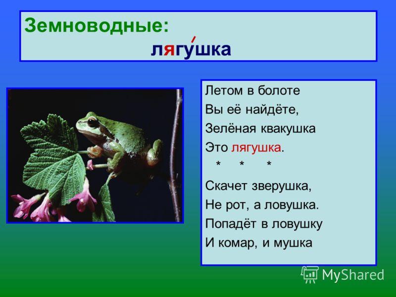 Земноводные: лягушка Летом в болоте Вы её найдёте, Зелёная квакушка Это лягушка. * * * Скачет зверушка, Не рот, а ловушка. Попадёт в ловушку И комар, и мушка
