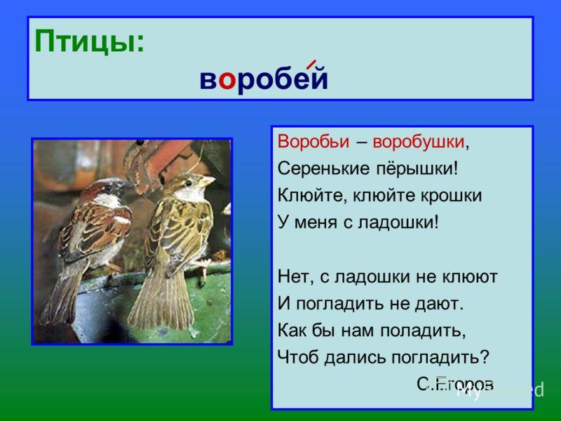 Птицы: воробей Воробьи – воробушки, Серенькие пёрышки! Клюйте, клюйте крошки У меня с ладошки! Нет, с ладошки не клюют И погладить не дают. Как бы нам поладить, Чтоб дались погладить? С.Егоров