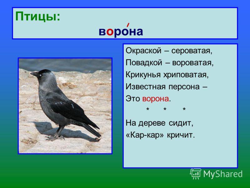 Птицы: ворона Окраской – сероватая, Повадкой – вороватая, Крикунья хриповатая, Известная персона – Это ворона. * * * На дереве сидит, «Кар-кар» кричит.