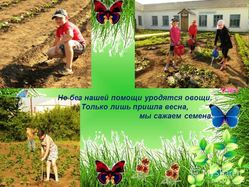 Не без нашей помощи уродятся овощи. Только лишь пришла весна, мы сажаем семена.