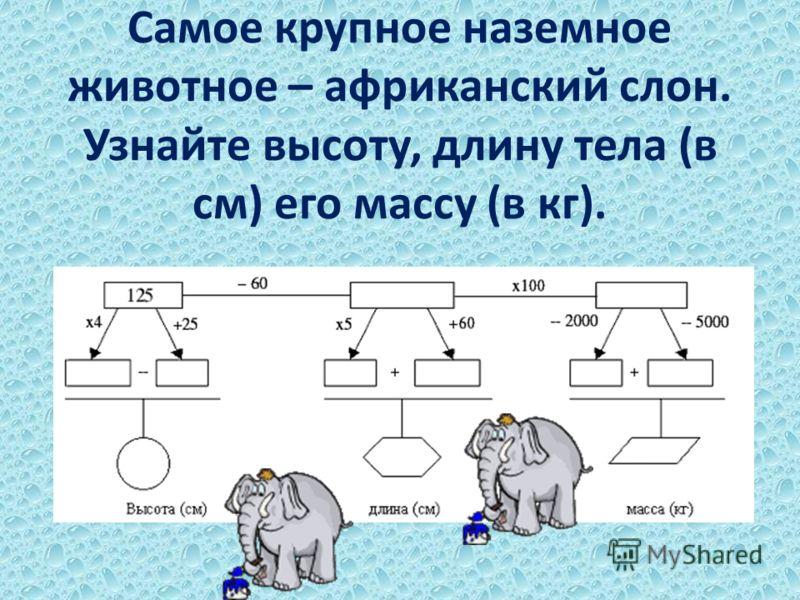 Самое крупное наземное животное – африканский слон. Узнайте высоту, длину тела (в см) его массу (в кг).