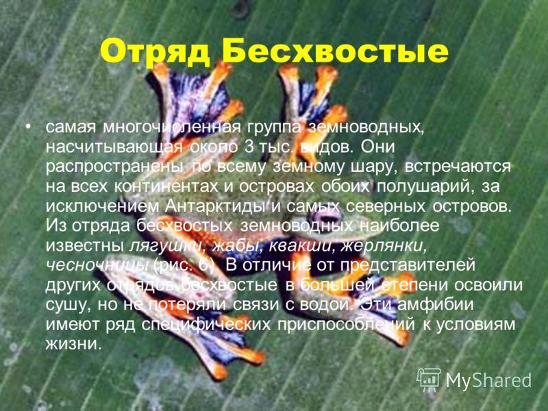 Отряд Бесхвостые самая многочисленная группа земноводных, насчитывающая около 3 тыс. видов. Они распространены по всему земному шару, встречаются на всех континентах и островах обоих полушарий, за исключением Антарктиды и самых северных островов. Из