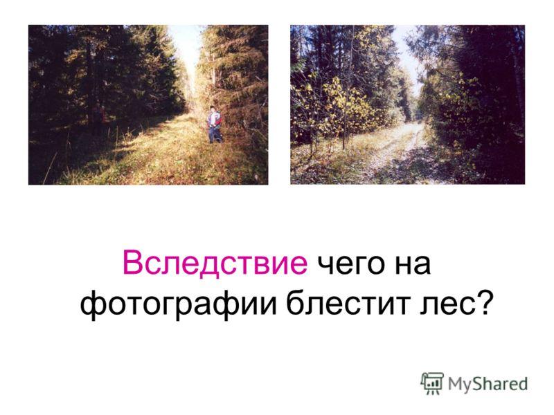 Вследствие чего на фотографии блестит лес?