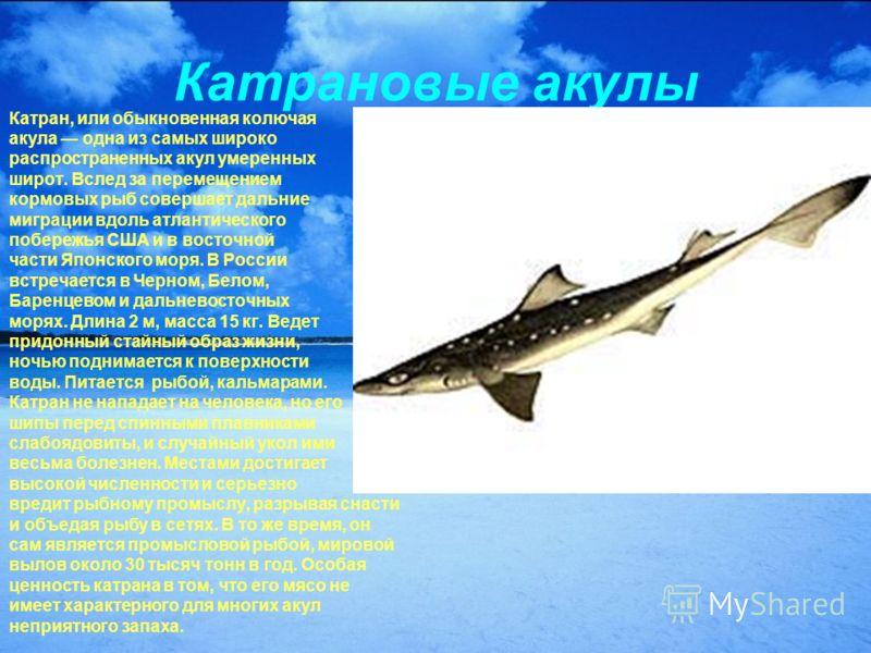 Катрановые акулы Катран, или обыкновенная колючая акула одна из самых широко распространенных акул умеренных широт. Вслед за перемещением кормовых рыб совершает дальние миграции вдоль атлантического побережья США и в восточной части Японского моря. В