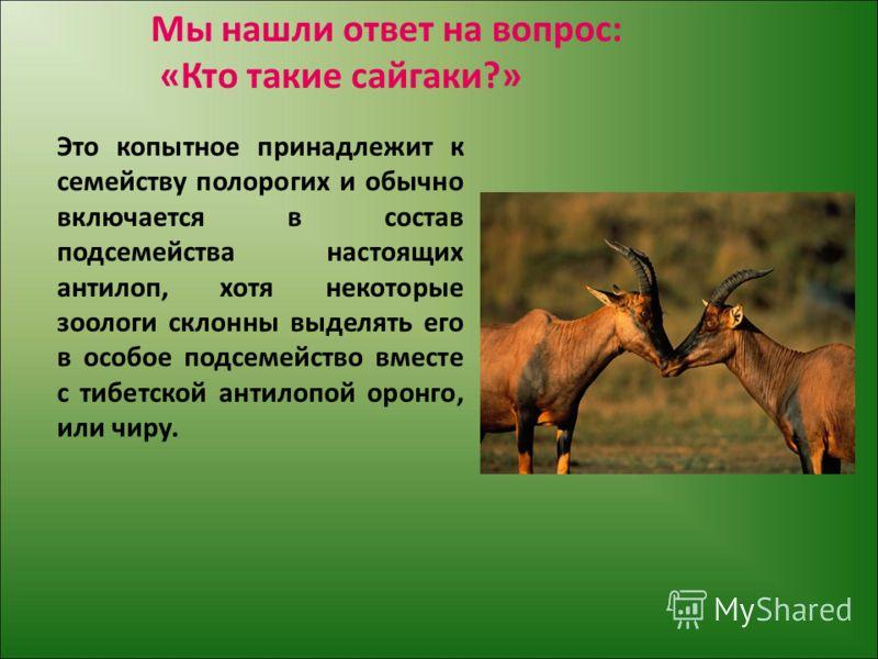 Мы нашли ответ на вопрос: «Кто такие сайгаки?» Это копытное принадлежит к семейству полорогих и обычно включается в состав подсемейства настоящих антилоп, хотя некоторые зоологи склонны выделять его в особое подсемейство вместе с тибетской антилопой