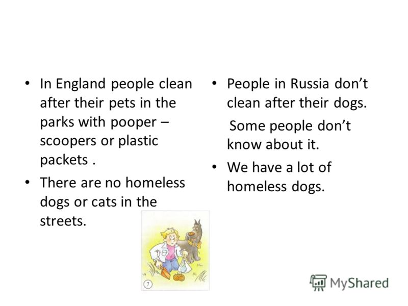 In England people clean after their pets in the parks with pooper – scoopers or plastic packets. There are no homeless dogs or cats in the streets. People in Russia dont clean after their dogs. Some people dont know about it. We have a lot of homeles