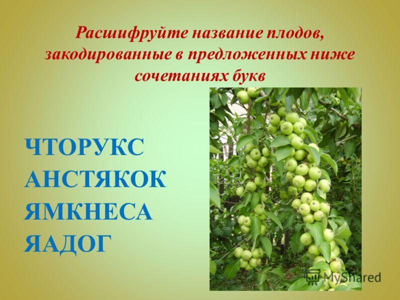 Расшифруйте название плодов, закодированные в предложенных ниже сочетаниях букв ЧТОРУКС АНСТЯКОК ЯМКНЕСА ЯАДОГ
