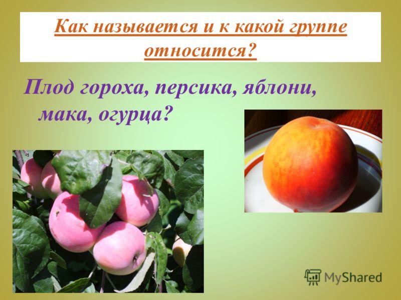 Как называется и к какой группе относится? Плод гороха, персика, яблони, мака, огурца?