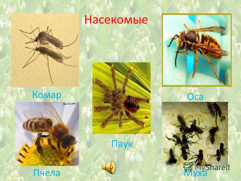 Насекомые Комар 10 Паук Оса ПчелаМуха
