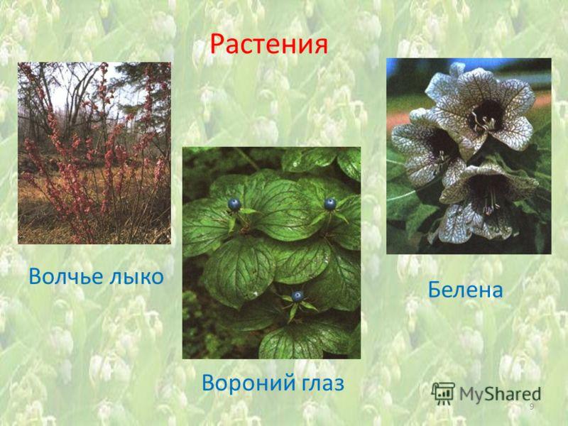Растения Вороний глаз 9 Волчье лыко Белена