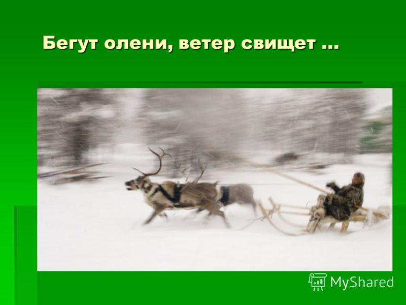 Бегут олени, ветер свищет … Бегут олени, ветер свищет …