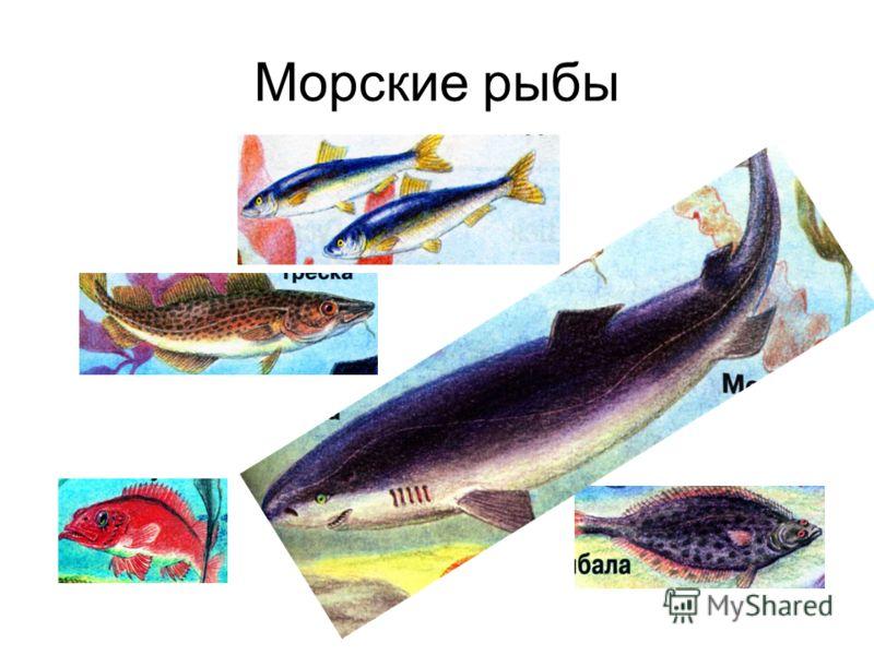 Рыбы морские рыбы презентация