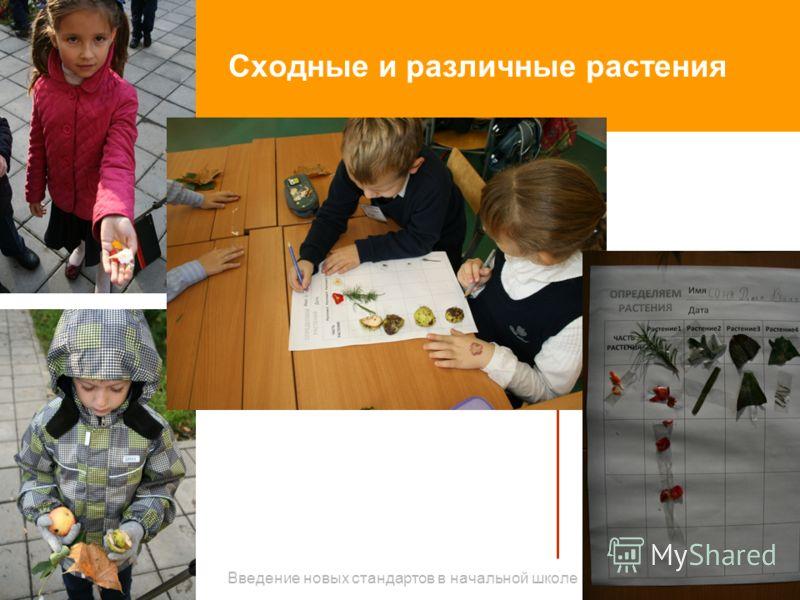 Сходные и различные растения Введение новых стандартов в начальной школе