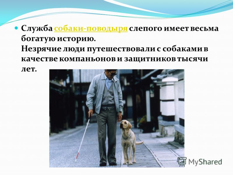 Служба собаки-поводыря слепого имеет весьма богатую историю. Незрячие люди путешествовали с собаками в качестве компаньонов и защитников тысячи лет.собаки-поводыря