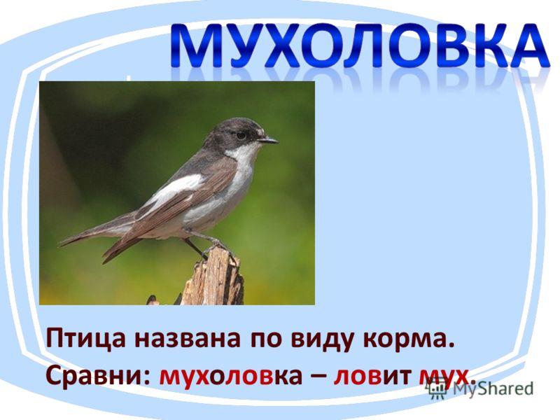 Птица названа по виду корма. Сравни: мухоловка – ловит мух.