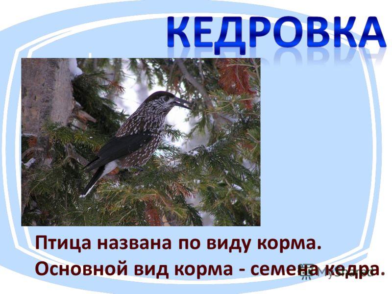 Птица названа по виду корма. Основной вид корма - семена кедра.