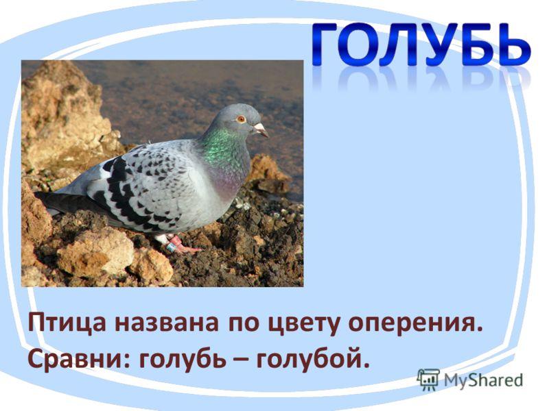 Птица названа по цвету оперения. Сравни: голубь – голубой.