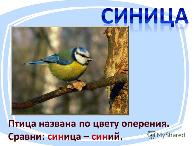 Птица названа по цвету оперения. Сравни: синица – синий.