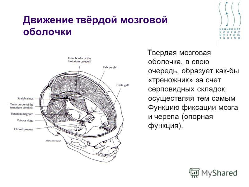 Движение твёрдой мозговой оболочки Твердая мозговая оболочка, в свою очередь, образует как-бы «треножник» за счет серповидных складок, осуществляя тем самым Функцию фиксации мозга и черепа (опорная функция).