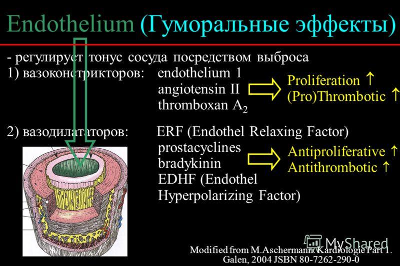 - регулирует тонус сосуда посредством выброса 1) вазоконстрикторов: endothelium 1 angiotensin II thromboxan A 2 2) вазодилататоров: ERF (Endothel Relaxing Factor) prostacyclines bradykinin EDHF (Endothel Hyperpolarizing Factor) Endothelium (Гуморальн