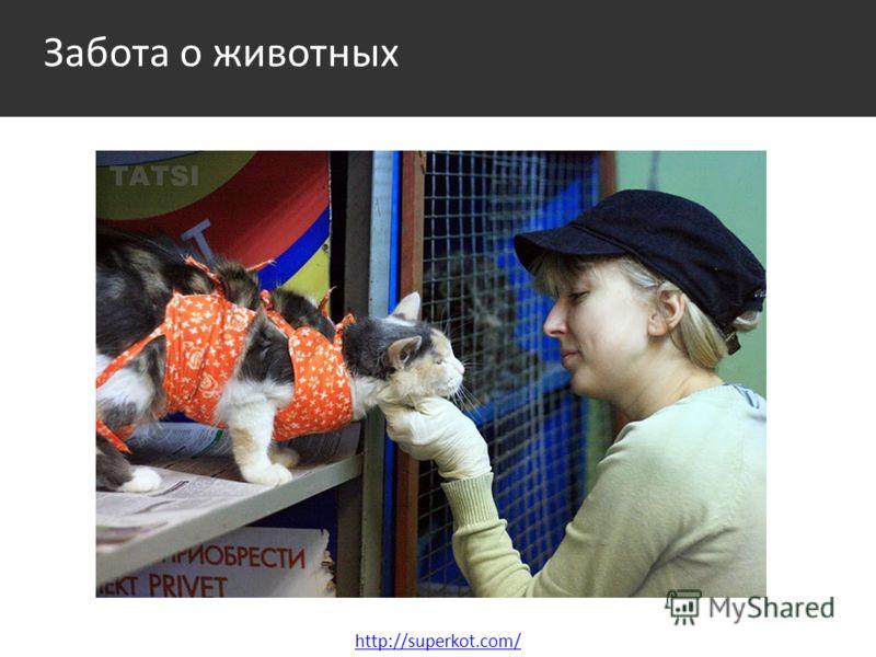 Забота о животных http://superkot.com/