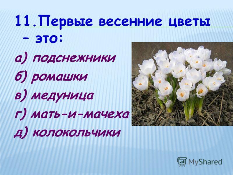 11.Первые весенние цветы – это: а) подснежники б) ромашки в) медуница г) мать-и-мачеха д) колокольчики