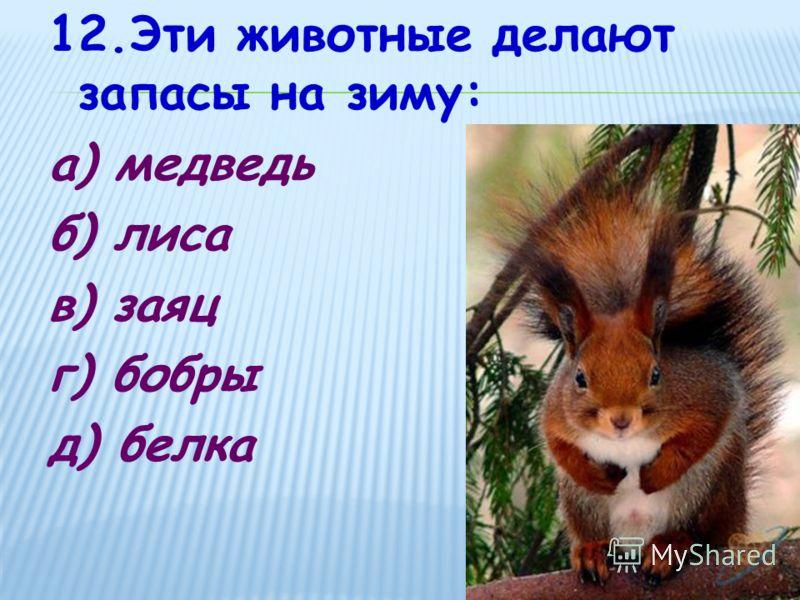 12.Эти животные делают запасы на зиму: а) медведь б) лиса в) заяц г) бобры д) белка