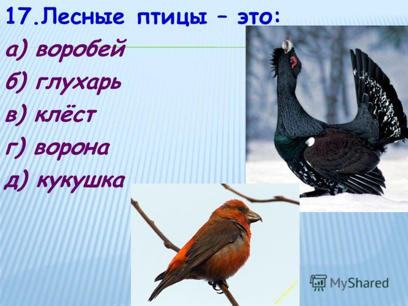 17.Лесные птицы – это: а) воробей б) глухарь в) клёст г) ворона д) кукушка