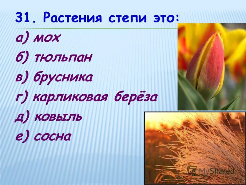 31. Растения степи это: а) мох б) тюльпан в) брусника г) карликовая берёза д) ковыль е) сосна