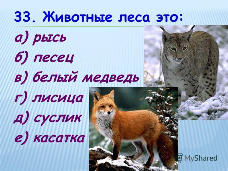 33. Животные леса это: а) рысь б) песец в) белый медведь г) лисица д) суслик е) касатка