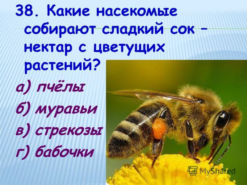 38. Какие насекомые собирают сладкий сок – нектар с цветущих растений? а) пчёлы б) муравьи в) стрекозы г) бабочки