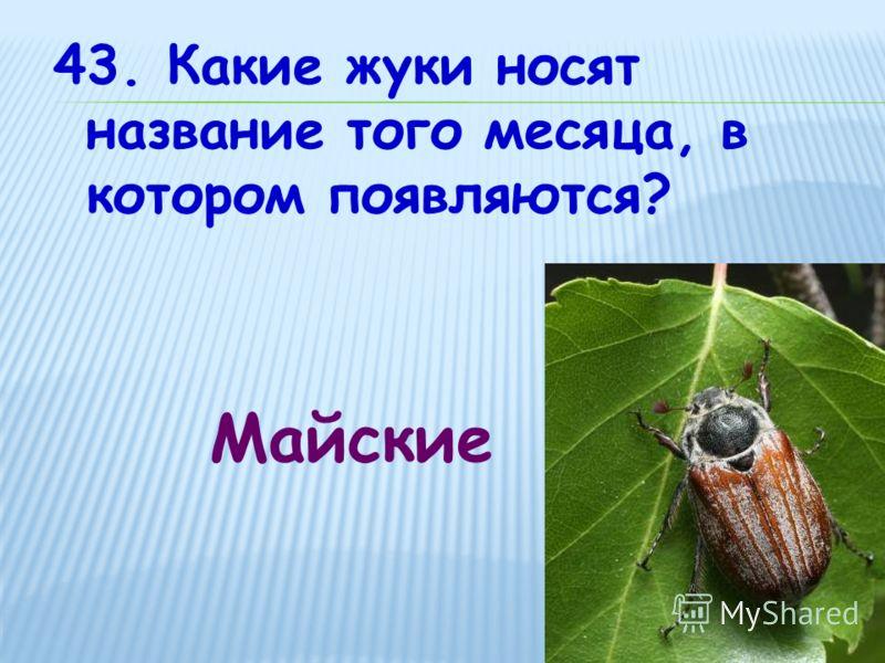 43. Какие жуки носят название того месяца, в котором появляются? Майские