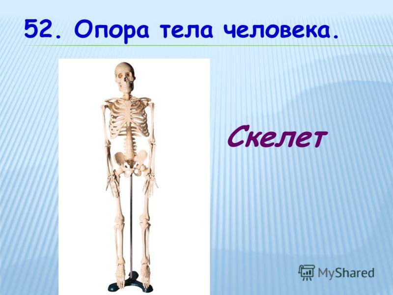 52. Опора тела человека. Скелет