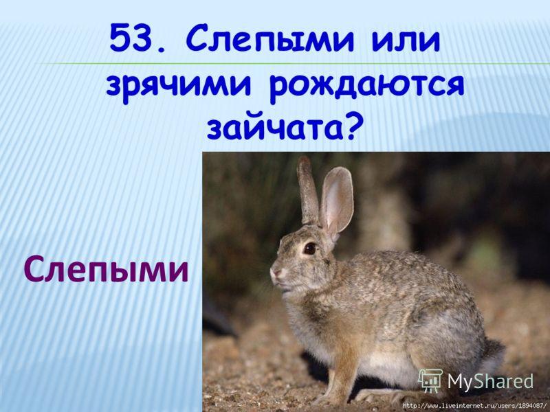 53. Слепыми или зрячими рождаются зайчата? Слепыми