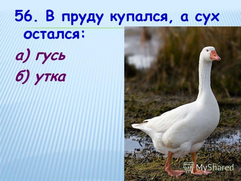 56. В пруду купался, а сух остался: а) гусь б) утка