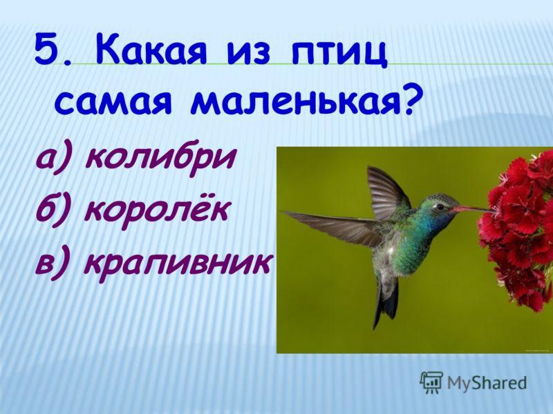 5. Какая из птиц самая маленькая? а) колибри б) королёк в) крапивник