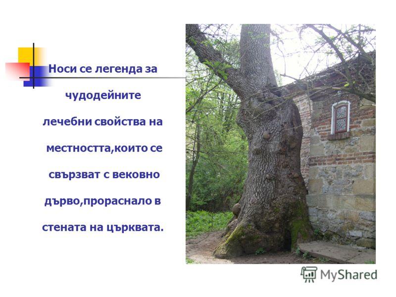 Носи се легенда за чудодейните лечебни свойства на местността,които се свързват с вековно дърво,прораснало в стената на църквата.